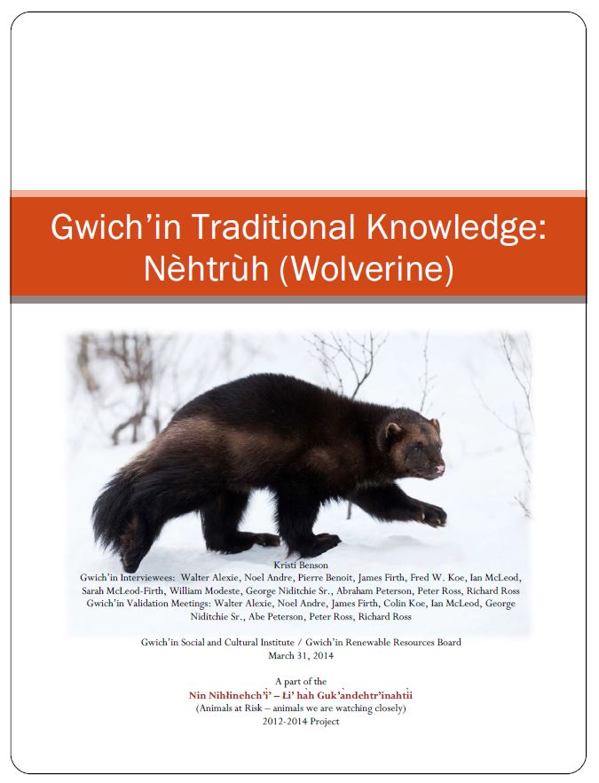 Gwich'in Traditional Knowledge: Nèhtrùh (Wolverine) Report Cover