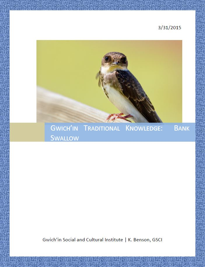 Gwich'in Traditional Knowledge: Bank Swallow Report Cover